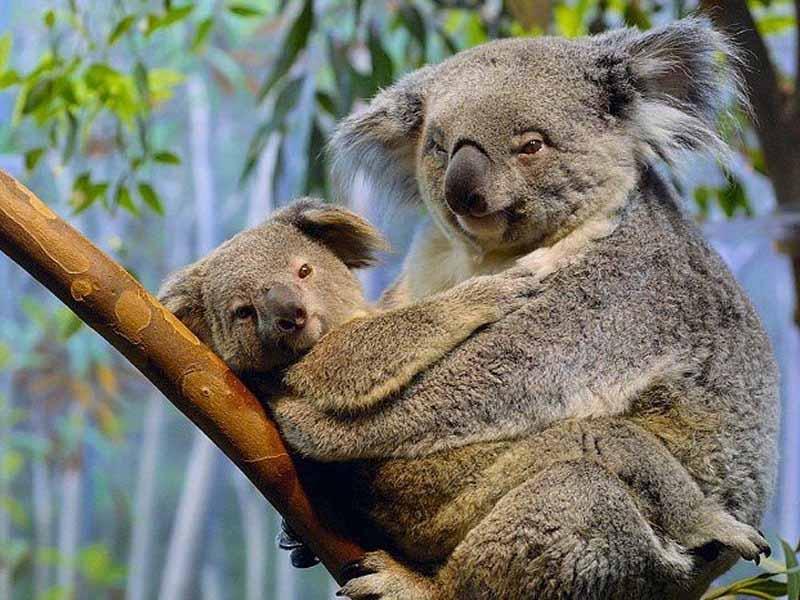 Ubunto 9.10 - Karmic Koala