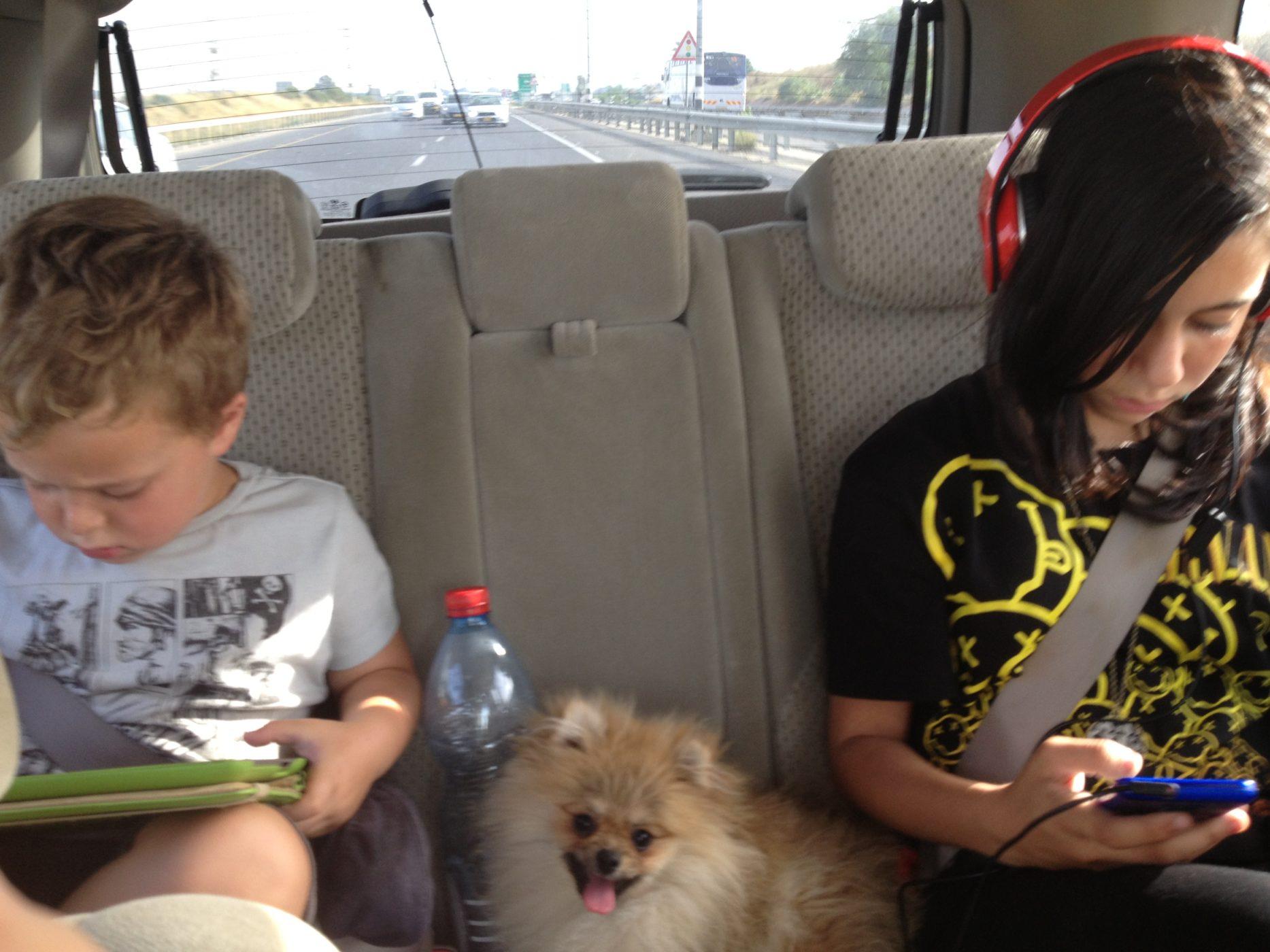 שם השולח: שלי פלדמן.  גם בדרכים לא ניתן להתנתק מהמסכים...!!! בטאבלט הבן הקטן ובגלקסי+אוזניות הבת הגדולה. מזל שהכלבה עדיין לא מכורה...