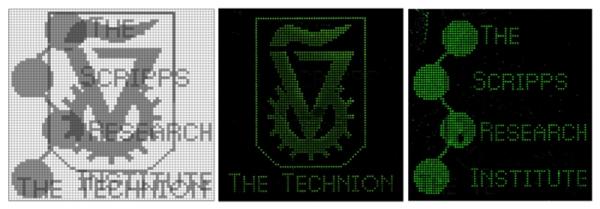 """לוגו הטכניון ומכון המחקר מוצאים באמצעות תאי DNA. מקור: יח""""צ"""