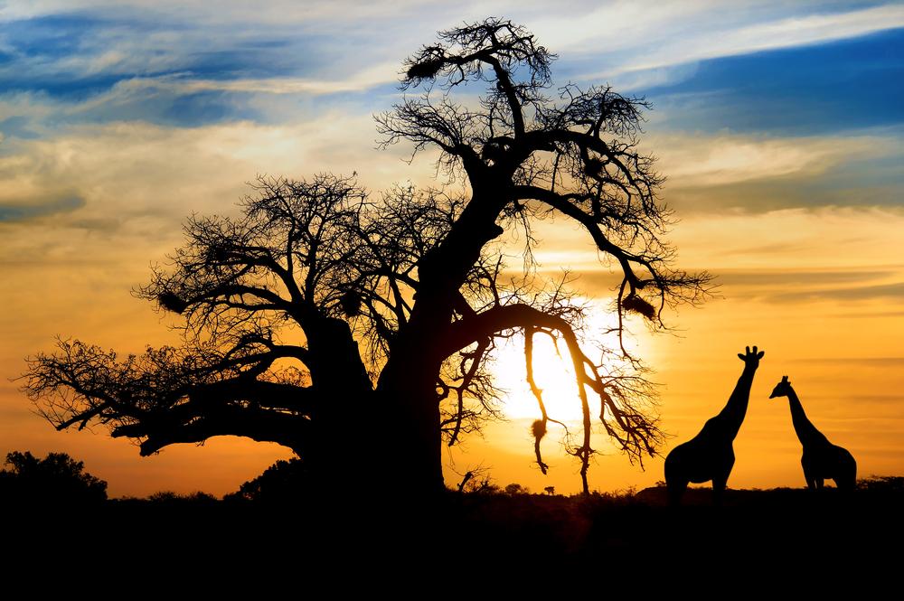 shutterstock africa