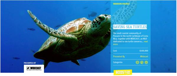 עוזרים להציל את צבי הים. מקור: צילום מסך