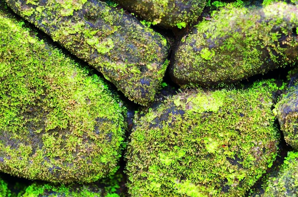 shutterstock moss