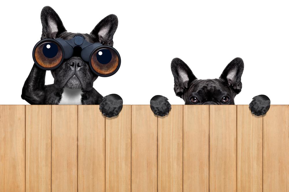 shutterstock dogs spying