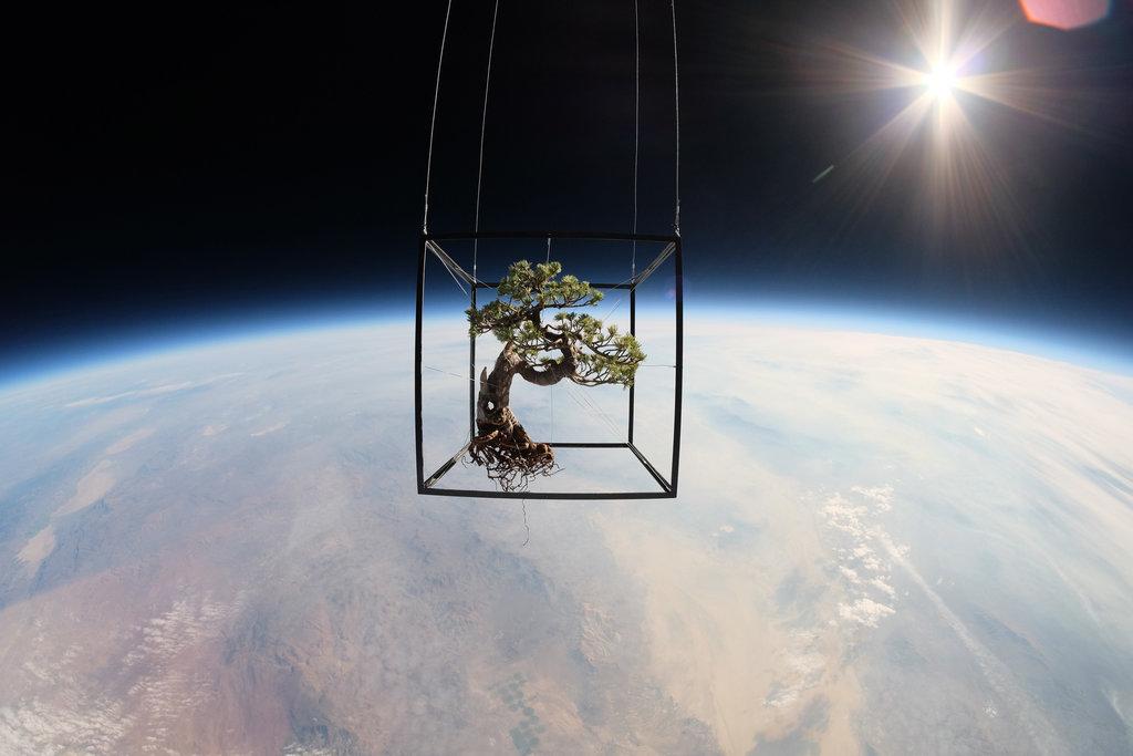עץ הבונסאי מרחף בחלל. מקור: Makoto Azuma