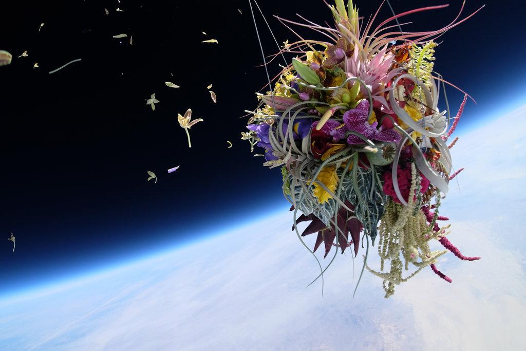 דבר אלי בפרחים... מקור: Makoto Azuma