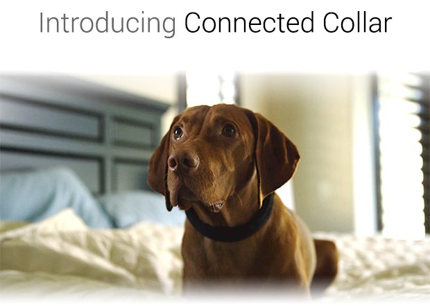 connected collar