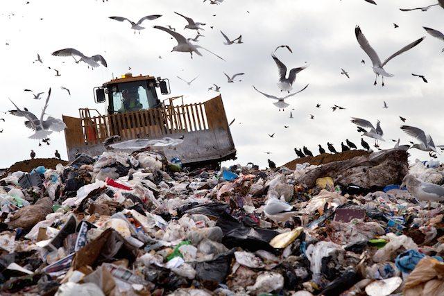 shutterstock garbage