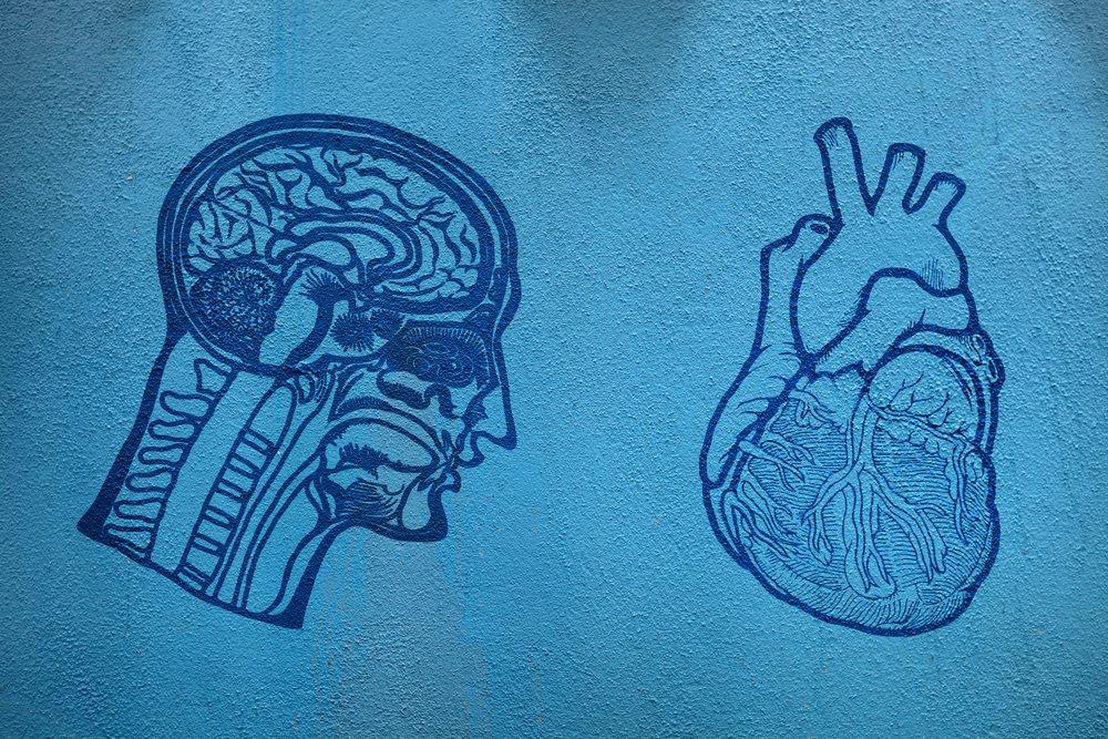 shutterstock brain vs heart