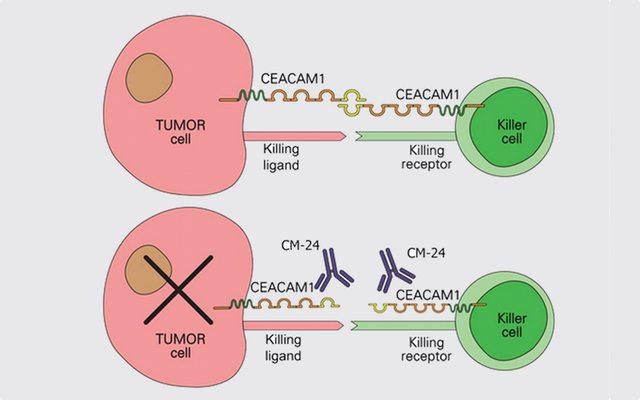 מקור: cCam Biotherapeutics