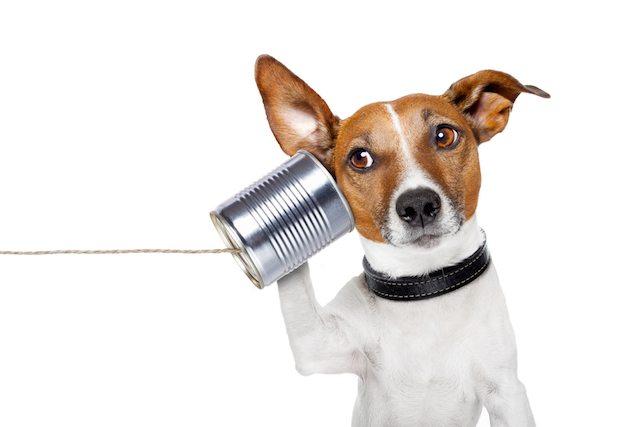 shutterstock dog phone