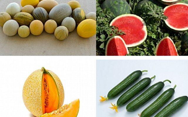 מקור: Origene seeds