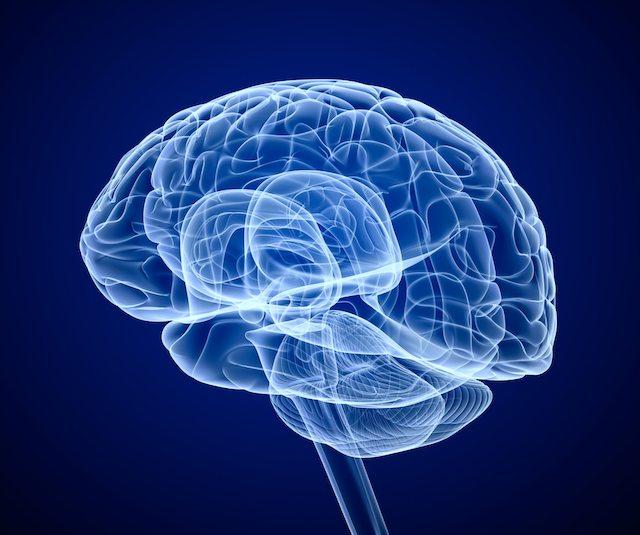 shutterstock brain