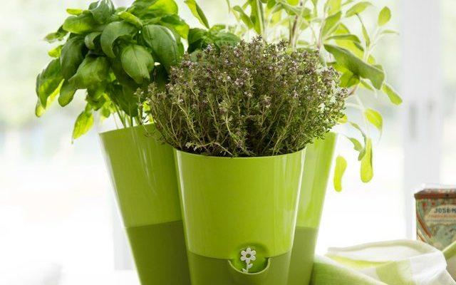 Smart Planter, מקור: עמוד המוצר
