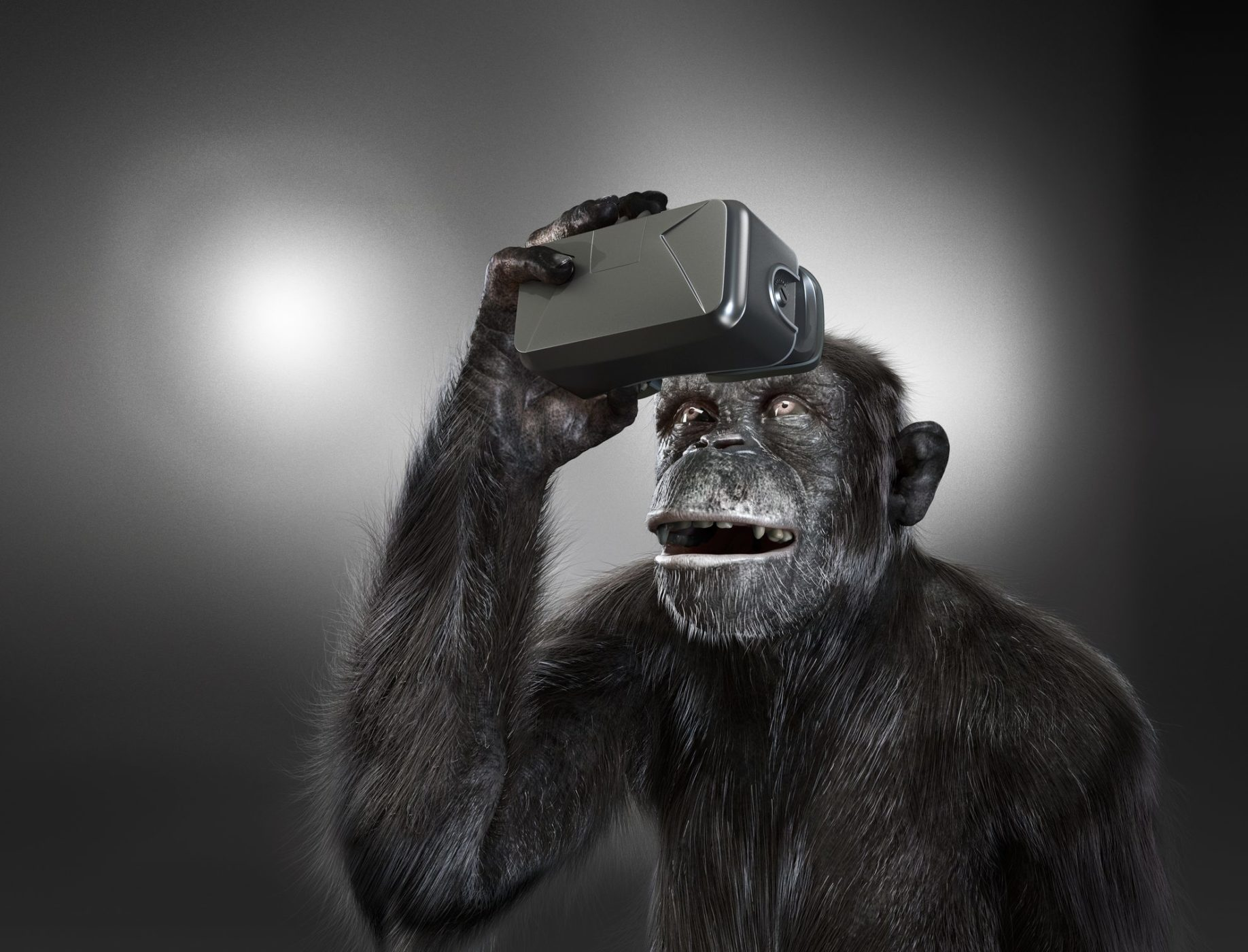 Chimpanzee with VR headset