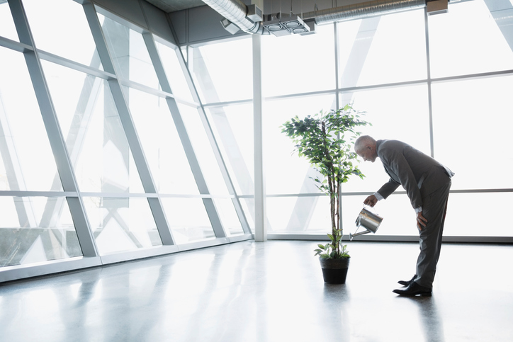 Businessman watering potted tree - getty images