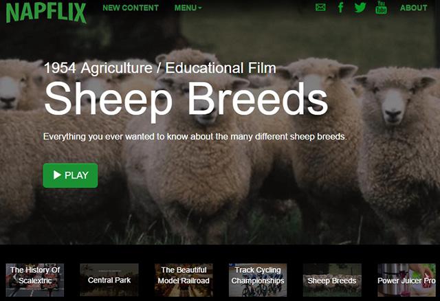 עכשיו מציג: סרטון הסברה מ-1954 על זני כבשים. מרתק. צילום מסך